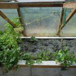 Légumes pleine terre au 15/09/2019 - vue 4