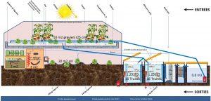 Schéma global du dispositif aquaponique