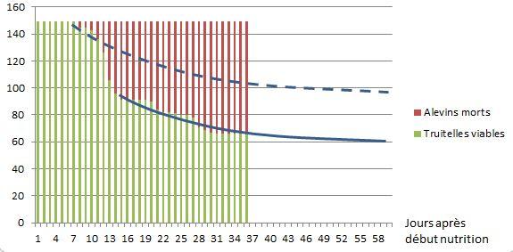 Evolution des alevins au cours de la croissance jusqu'au stade  4 grammes.