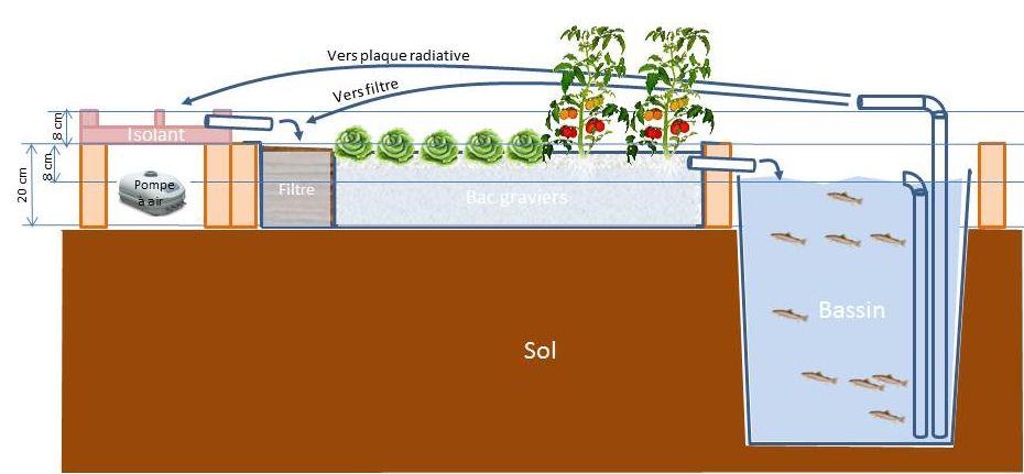 Innovation thermique en aquaponie : schéma des niveaux des différents éléments