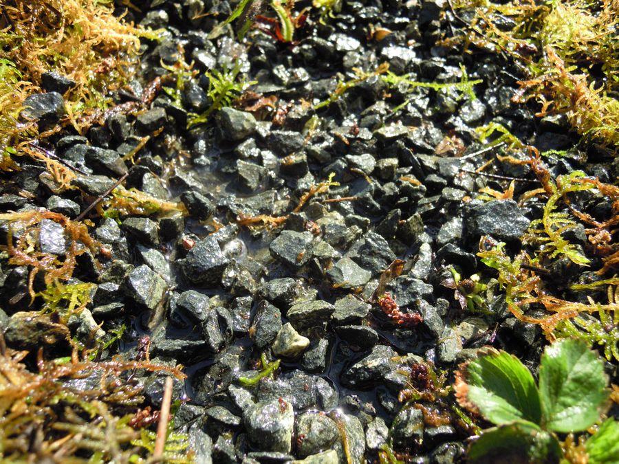 Bacs de culture sur substrat de graviers non calcaires