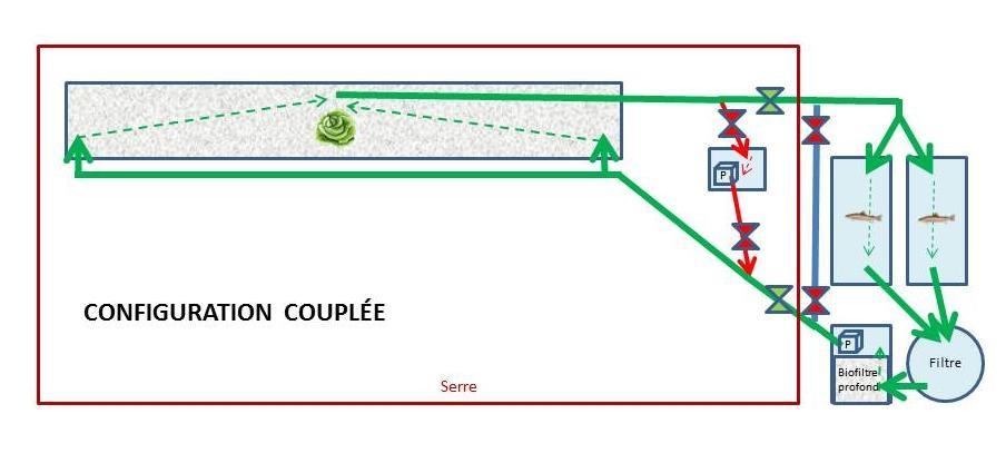 Configuration couplée d'un système aquaponique découplable